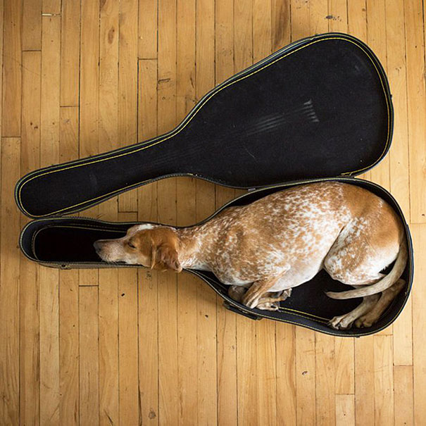 Maddie Sleeping In A Guitar Case