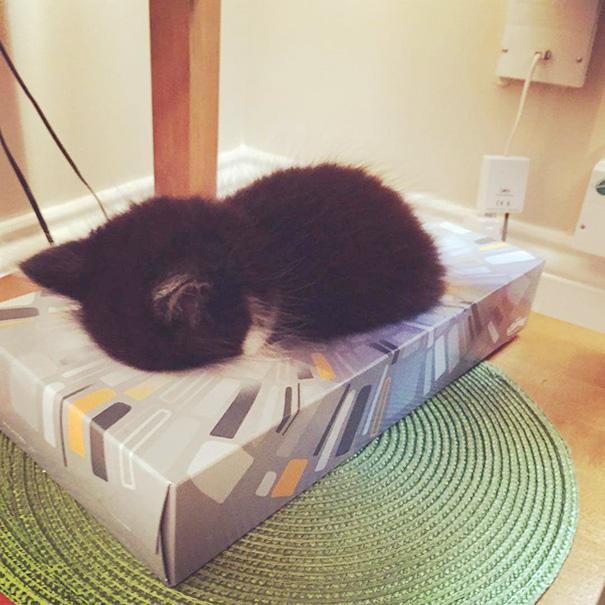 Omar Asleep In A Tissue Box