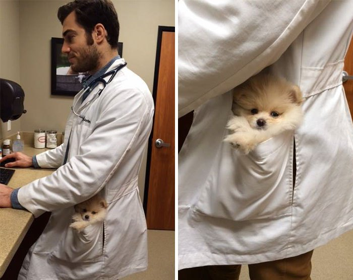 hottest-vet-pet-doctor-evan-antin-california-3191__700