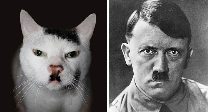 Zvieratá, ako celebrity, štvorhra hviezdy medzi zvieratami