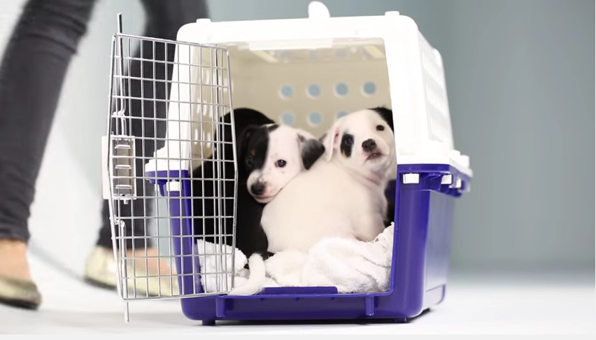 2-puppies-kittens