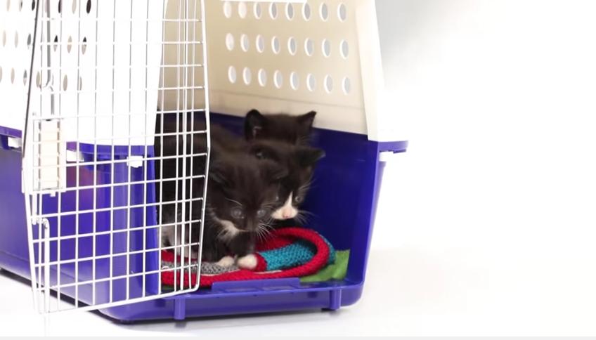 3- puppies kittens