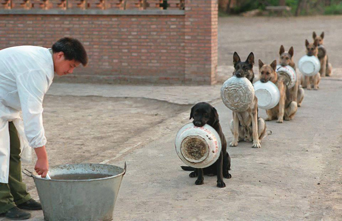 police-dogs-waiting-food-china-1