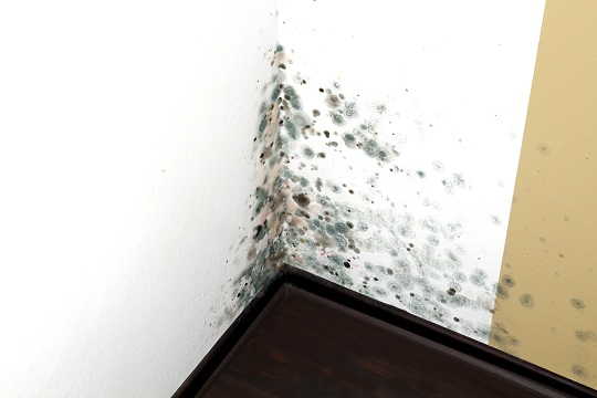 mold-in-house