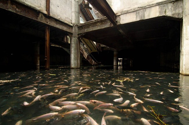 312705-650-1457296842-flooded-abandoned-mall-with-fish-bangkok-thailand