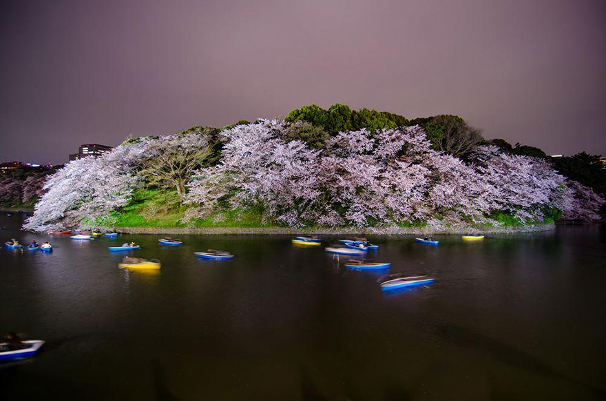 spring-japan-cherry-blossoms-national-geographics-19