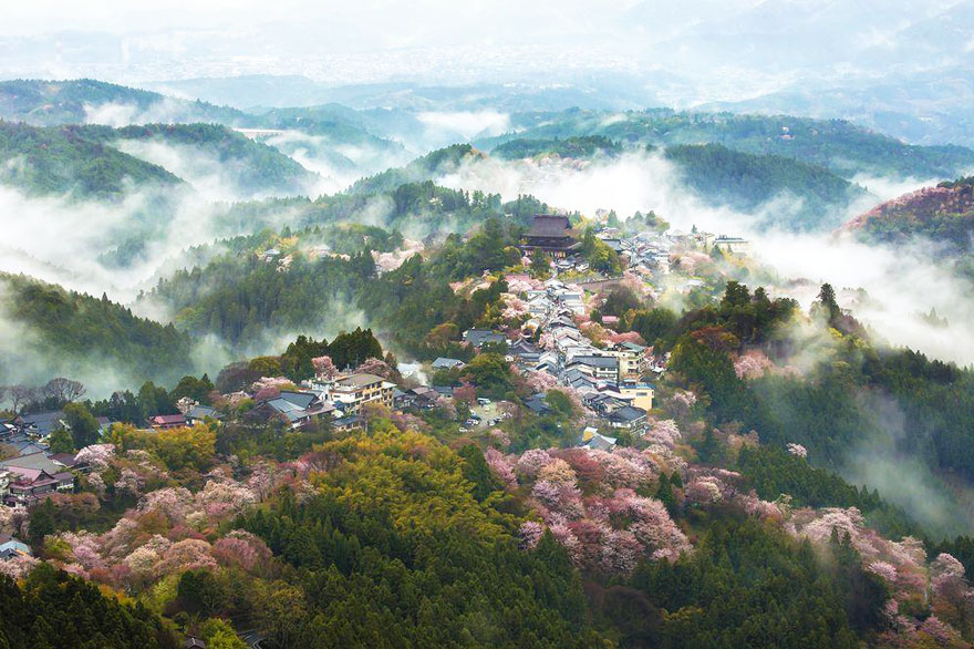 spring-japan-cherry-blossoms-national-geographics-24