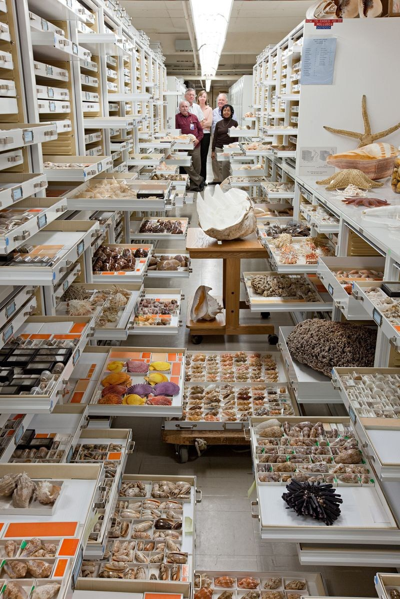 natural-history-museum-collection-75
