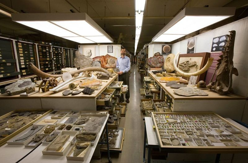 natural-history-museum-collection-10[1]