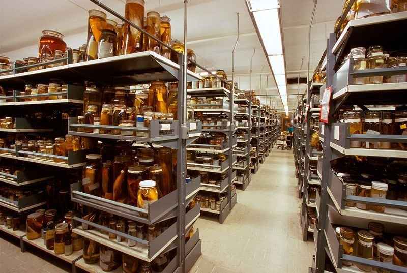 natural-history-museum-collection-62