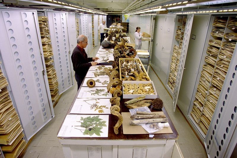 natural-history-museum-collection-32