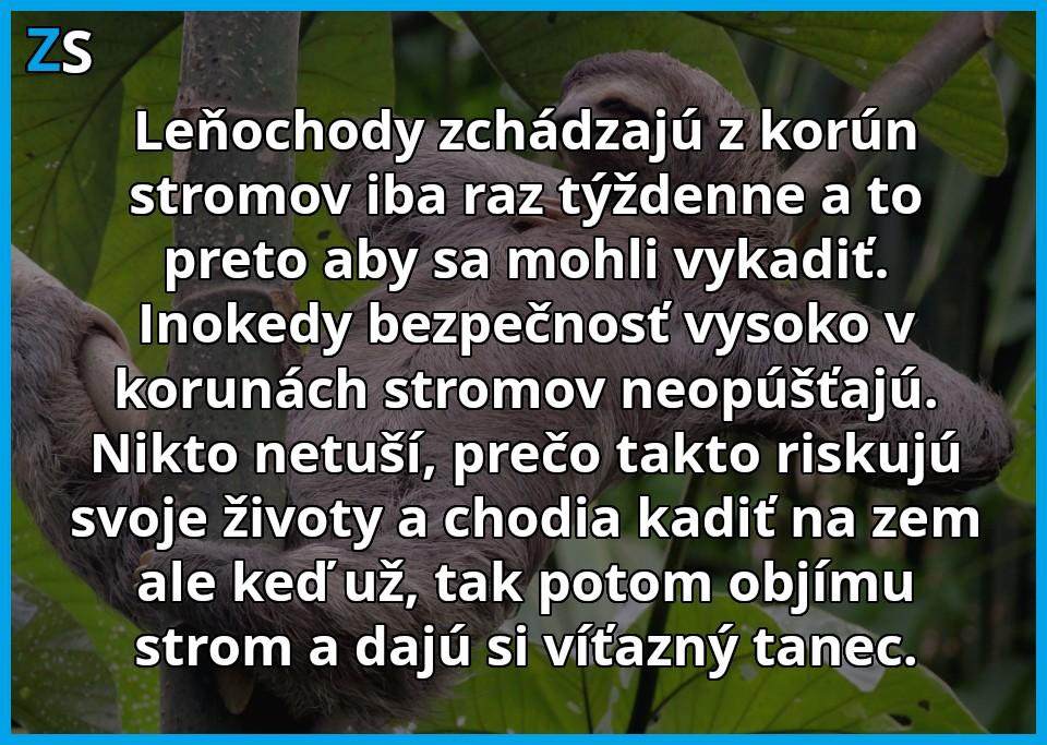 lenochod 1
