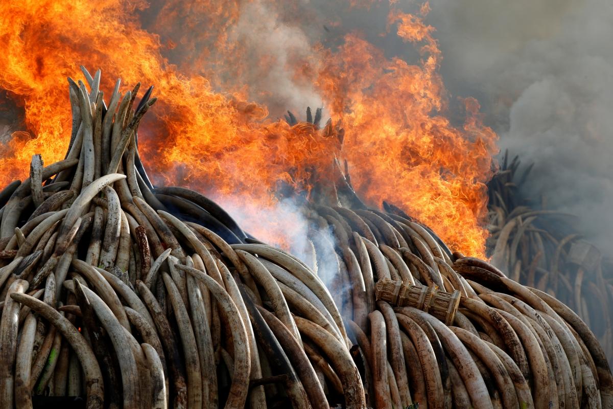 ivory-bonfire-kenya