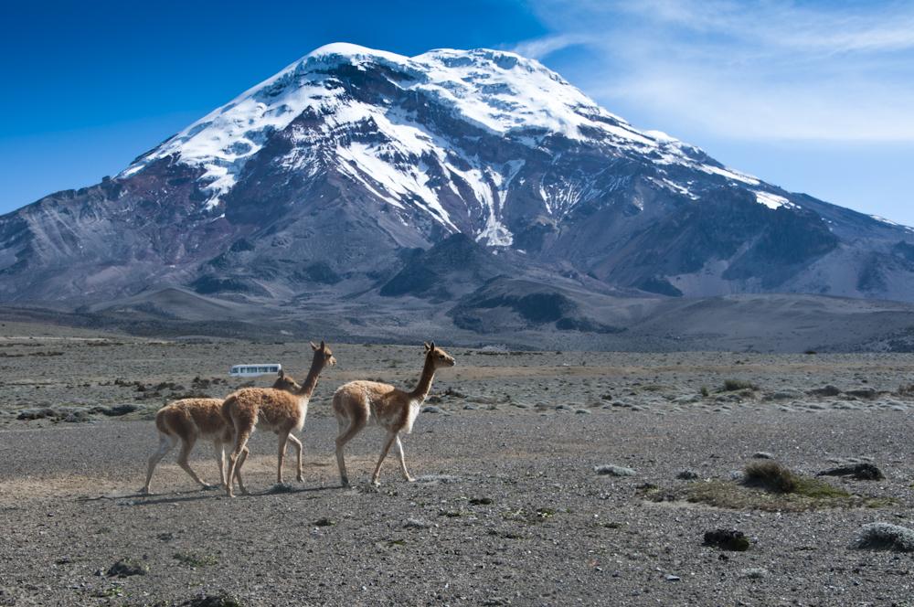 Chimborazo-018