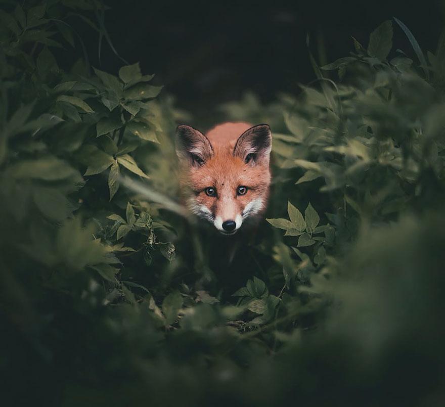 wild-animal-photography-konsta-punkka-8