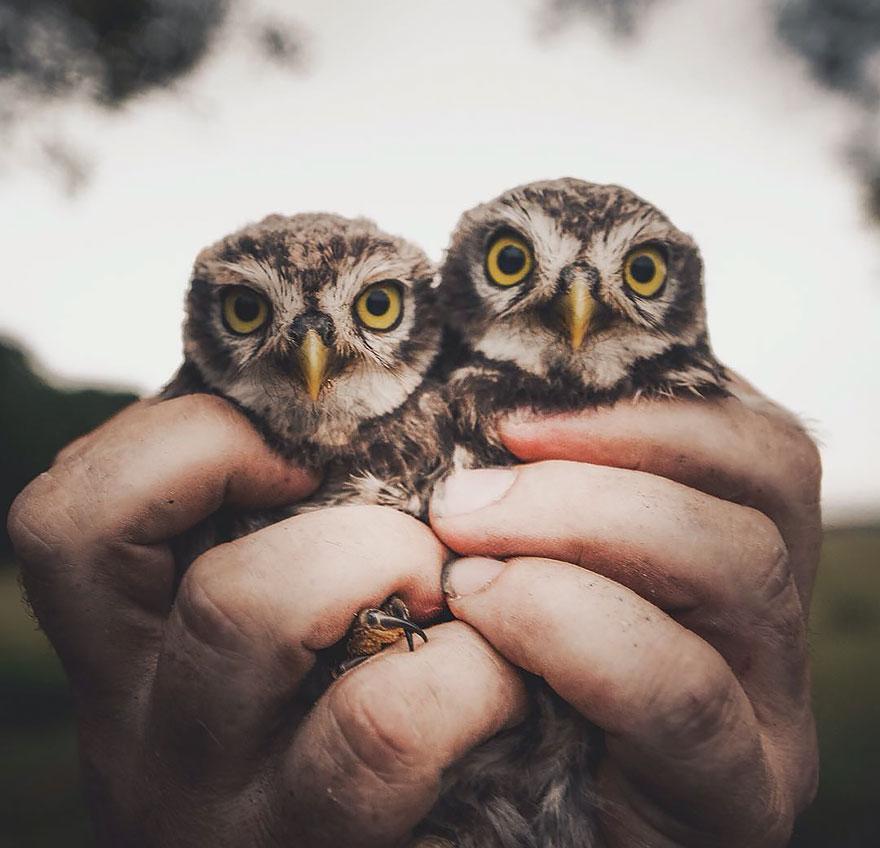 wild-animal-photography-konsta-punkka-9