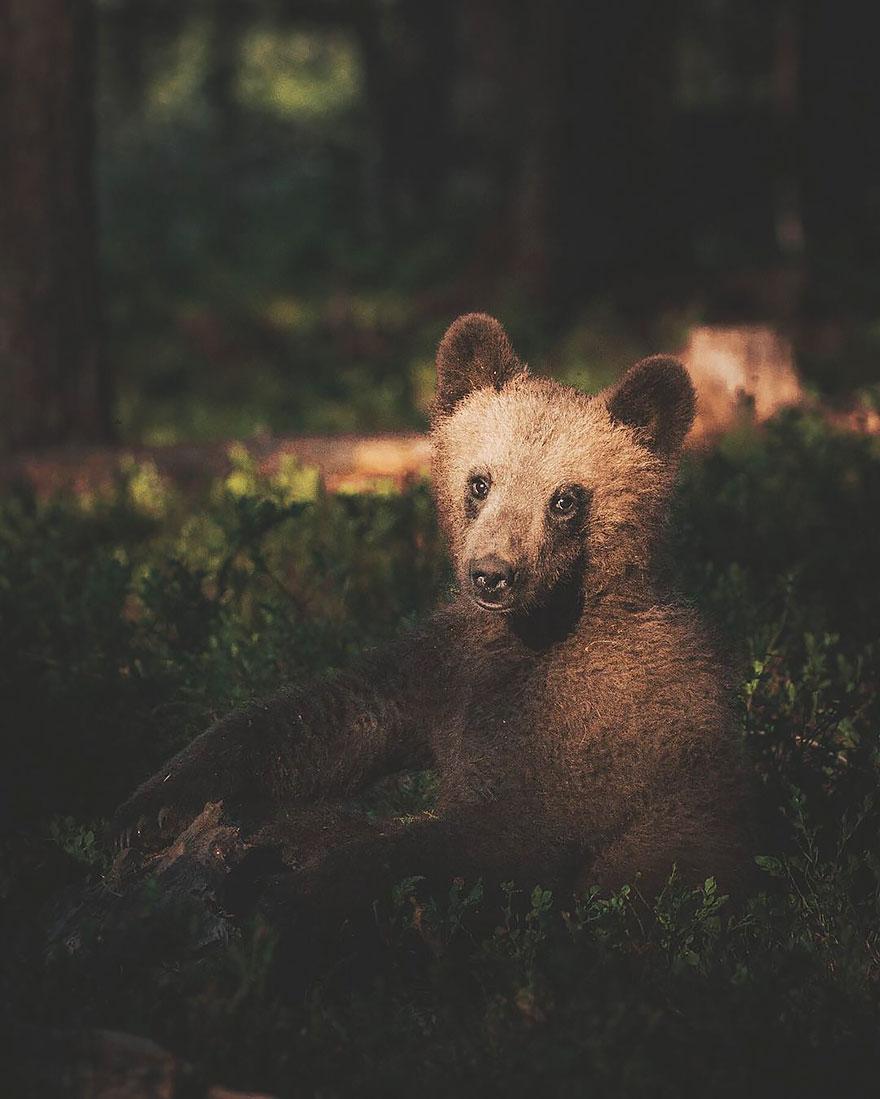 wild-animal-photography-konsta-punkka-14