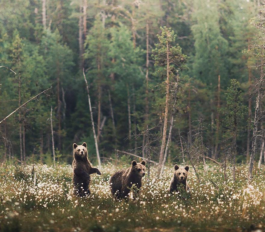 wild-animal-photography-konsta-punkka-15
