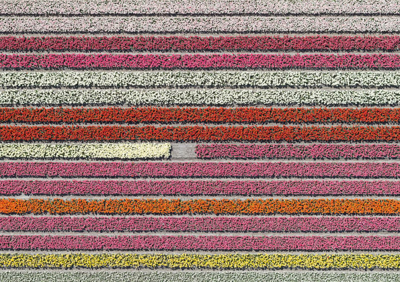 aerial-photos-show-just-how-beautiful-netherlands-tulip-fields-are5-805x569