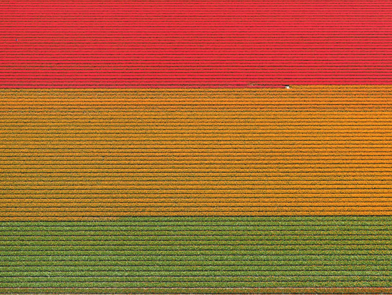 aerial-photos-show-just-how-beautiful-netherlands-tulip-fields-are7-805x607