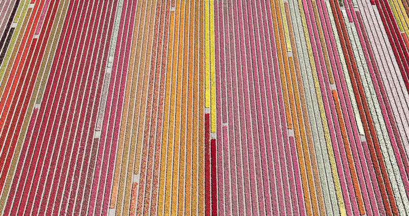 aerial-photos-show-just-how-beautiful-netherlands-tulip-fields-are-805x426