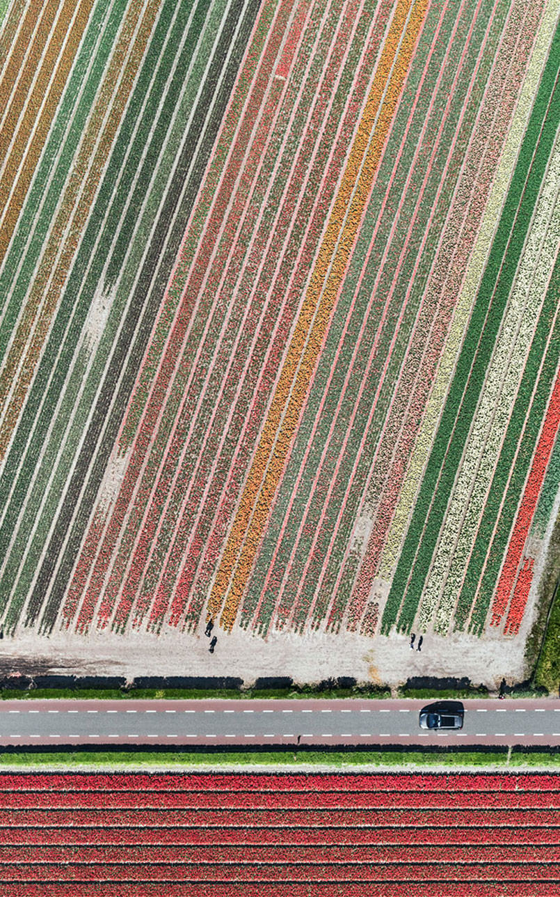 aerial-photos-show-just-how-beautiful-netherlands-tulip-fields-are2-805x1288