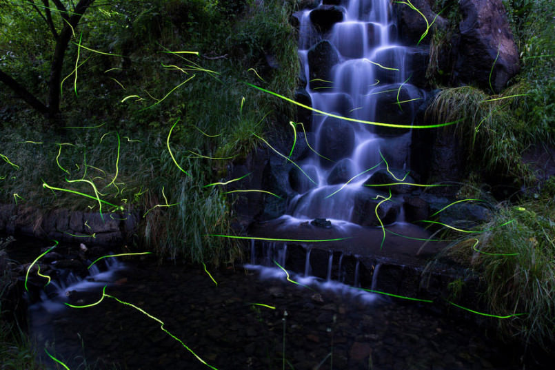 these-photos-of-fireflies-show-how-beautiful-summer-nights-are-in-japan5-1-805x537