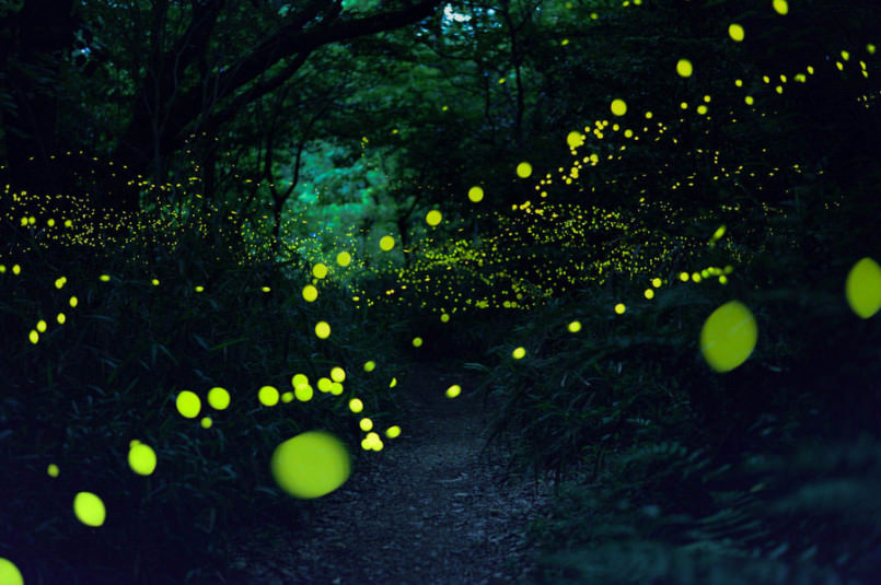 these-photos-of-fireflies-show-how-beautiful-summer-nights-are-in-japan3-805x535