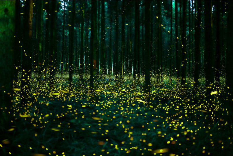 these-photos-of-fireflies-show-how-beautiful-summer-nights-are-in-japan6-805x541