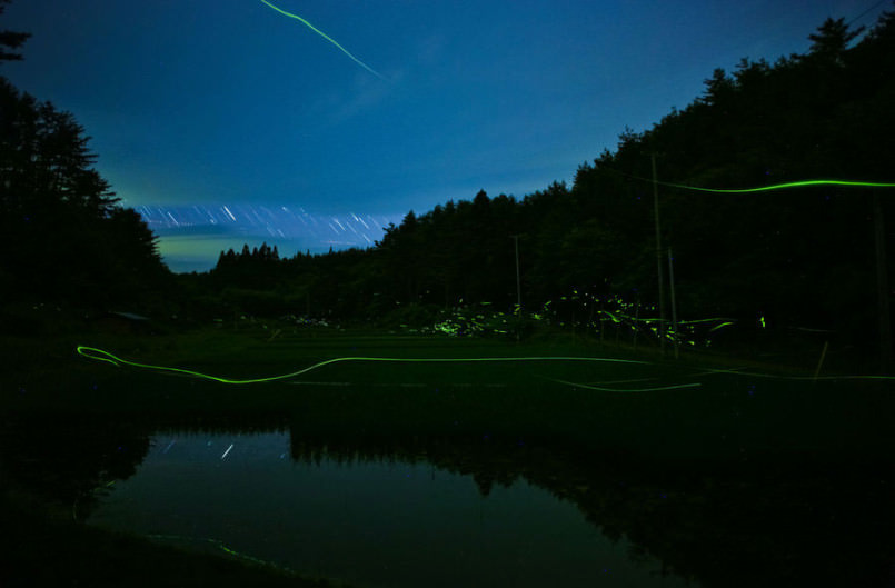 these-photos-of-fireflies-show-how-beautiful-summer-nights-are-in-japan4-805x529