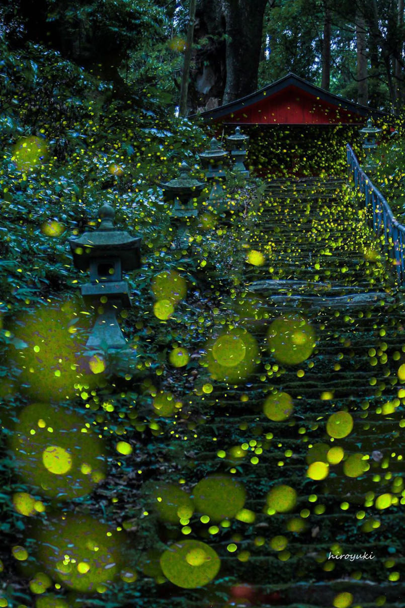 these-photos-of-fireflies-show-how-beautiful-summer-nights-are-in-japan2-805x1208