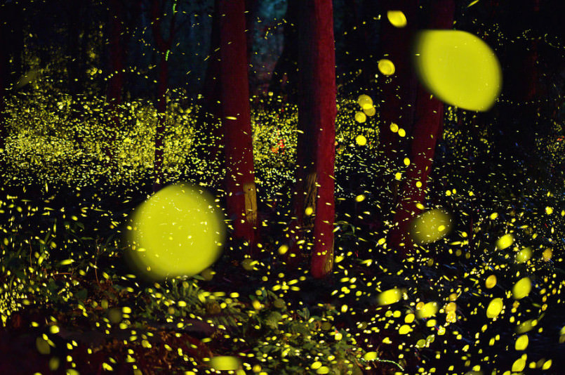 these-photos-of-fireflies-show-how-beautiful-summer-nights-are-in-japan7-805x534
