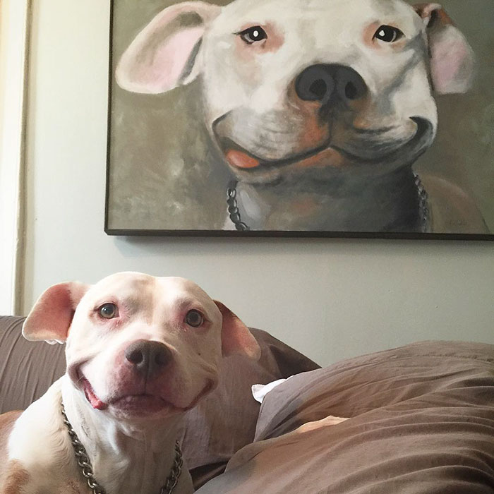 smiling-dog-stray-pit-bull-adopted-brinks-13