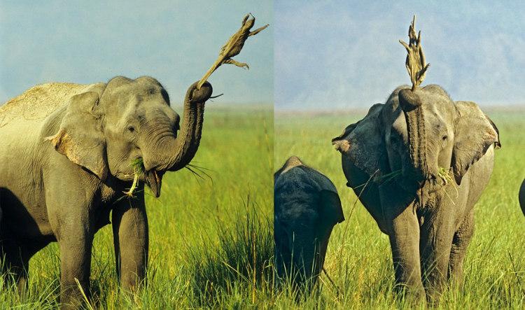 Elephant-and-Lizard
