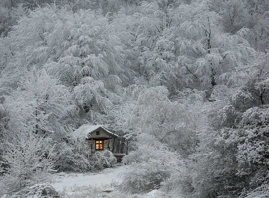 cozy-cabins-in-the-woods-1-575f9f08003ed__880