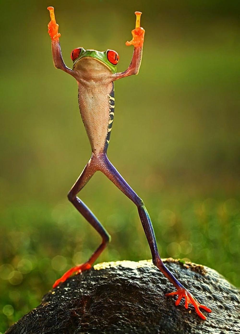 11405-0ashikhei-goh-of-indonesia-frog-flipping-the-double-bird-not-photoshopped-771676-1000-8358b5af44-1475750867