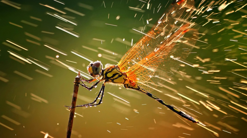 12355-macro-ventube-com-dragonfly-and-water-1173560-1000-8358b5af44-1475750867