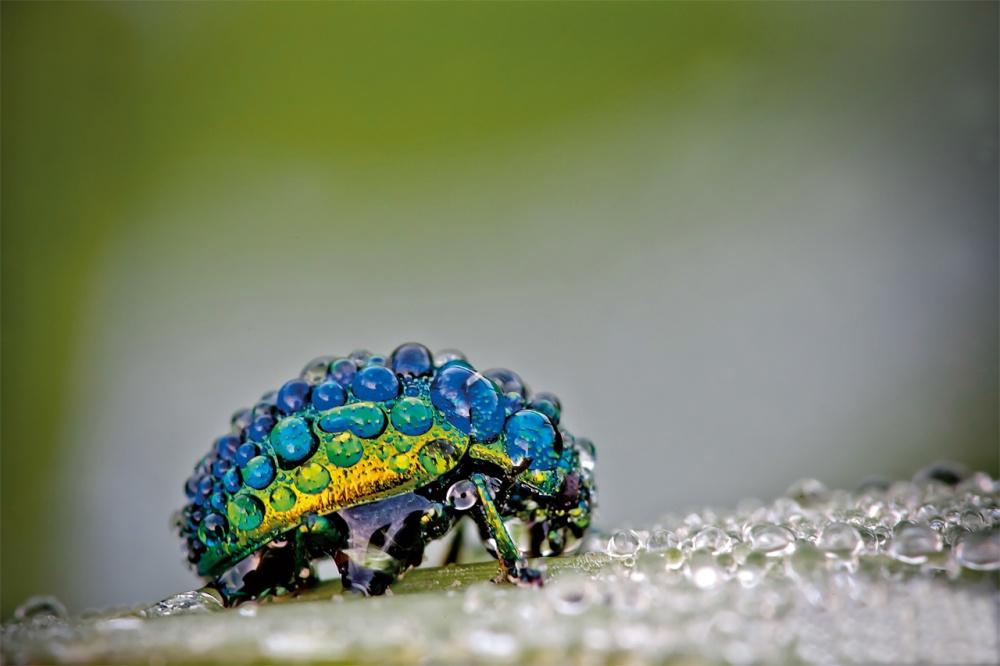 11755-3-scarabee-1000-e1c54a13fc-1475750867