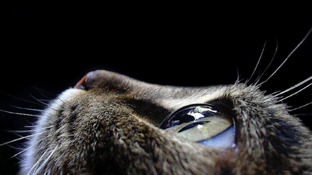 12155-animals-pictures-cat-eyes-macro-photography-1000-735c0479a7-1475750867