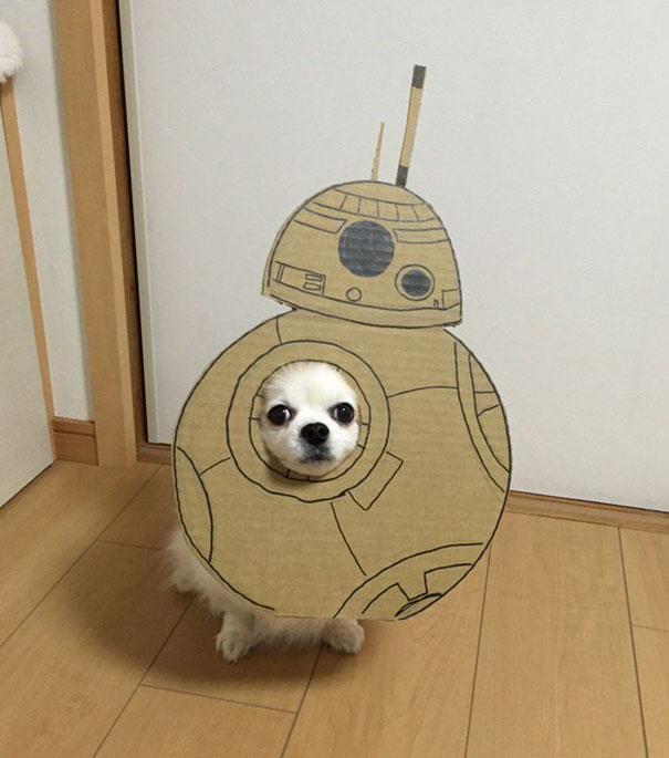 dog-costume-cardboard-cutouts-myouonnin-12-580f54033daf4__605