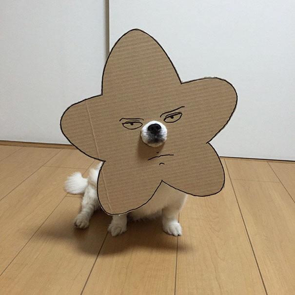 dog-costume-cardboard-cutouts-myouonnin-33-580f543302db5__605