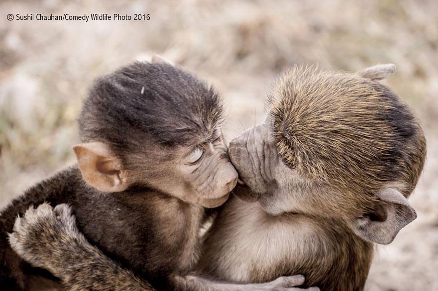 comedy-wildlife-photography-awards-2016-22-57f103c86793e__880