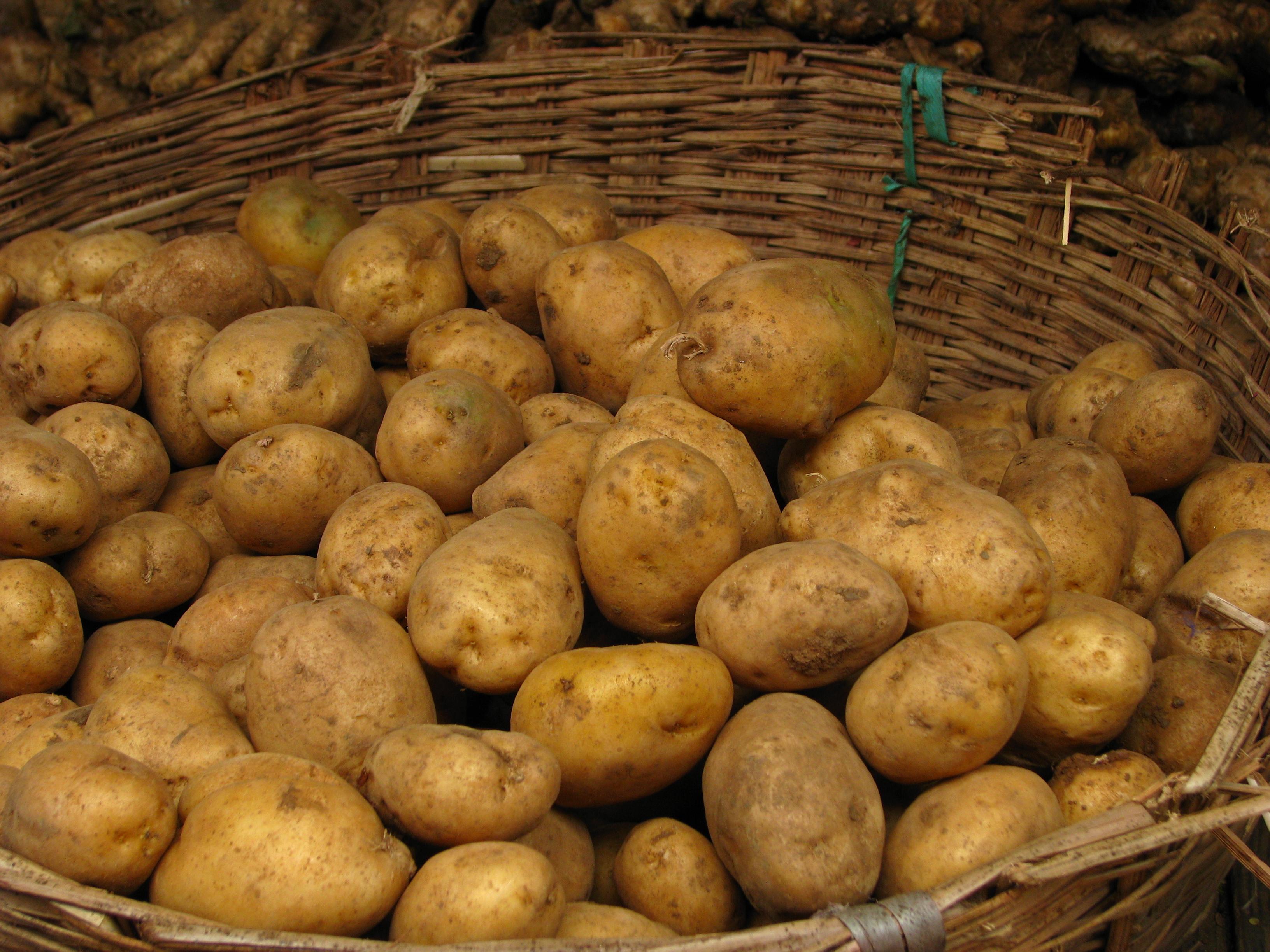 Výsledok vyhľadávania obrázkov pre dopyt potatoes