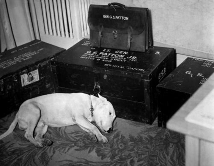 "Faithful friend mourns American hero. Along with the many millions to mourn the passing of American hero, General George S. Patton, Jr., is his dog ""Willie,"" the late general's pet bull terrier. Bad Nauheim, Germany. January 1946. INP. (OWI) Exact Date Shot Unknown NARA FILE #: 208-PU-153C-14 WAR & CONFLICT #: 754"