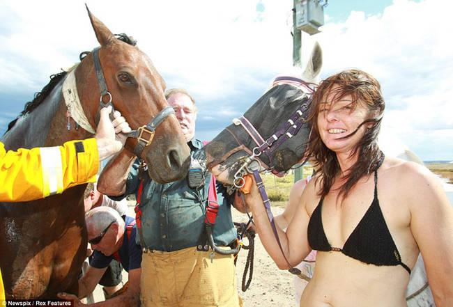 caballo-rescate-13