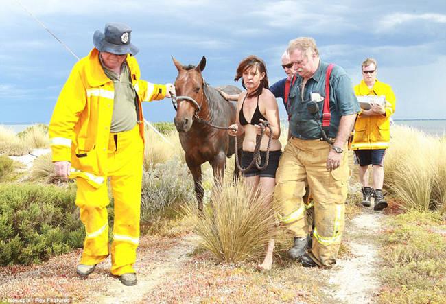 caballo-rescate-14