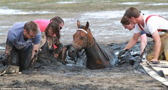 caballo-rescate-9