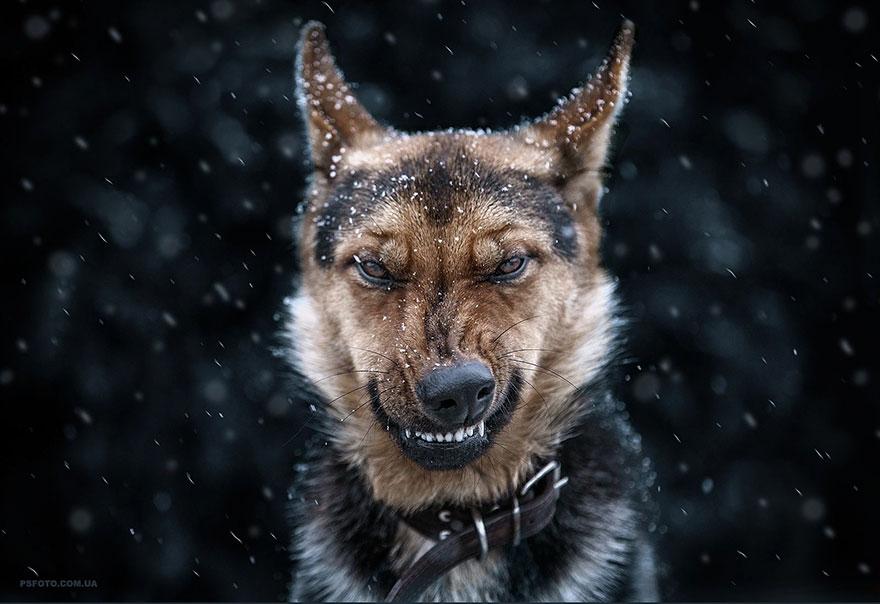 animal-portraits-sergey-polyushko-30-582b061235ddd__880