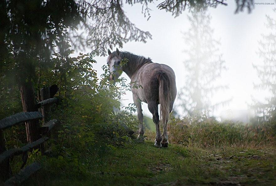 animal-portraits-sergey-polyushko-28-582b060c7146e__880