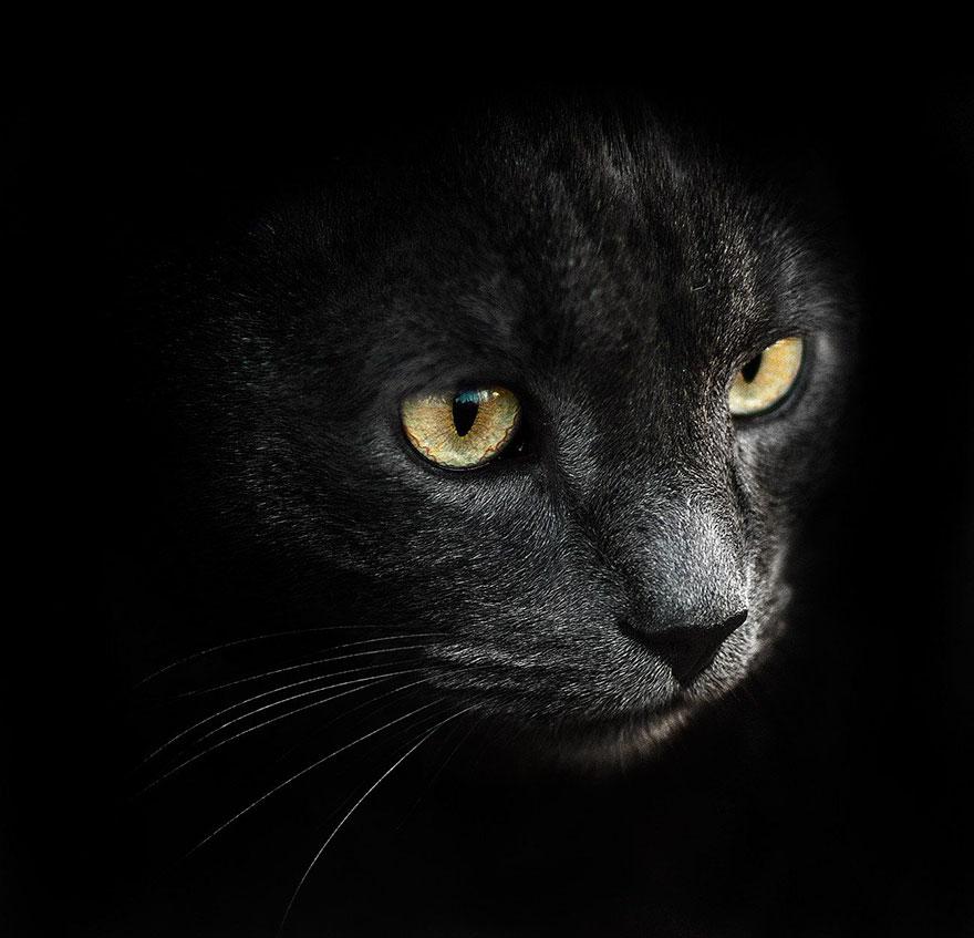animal-portraits-sergey-polyushko-19-582b05f0241e3__880